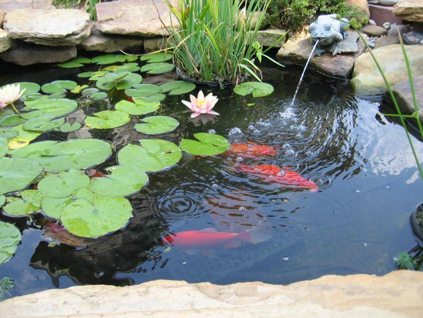 Estanque pequeño para tener peces
